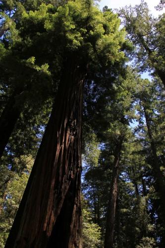 Dag 17: Santa Cruz og Big Basin State Park