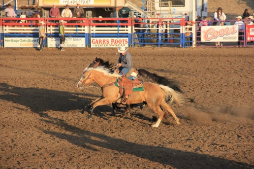 Dag 24: Rodeo