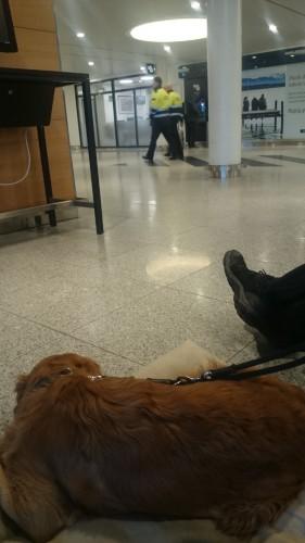 At flyve med hund