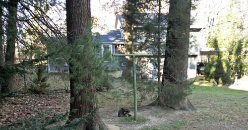 Vaskebjørn – og meget andet