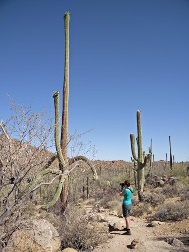 Dag 10: Saguaro National Park